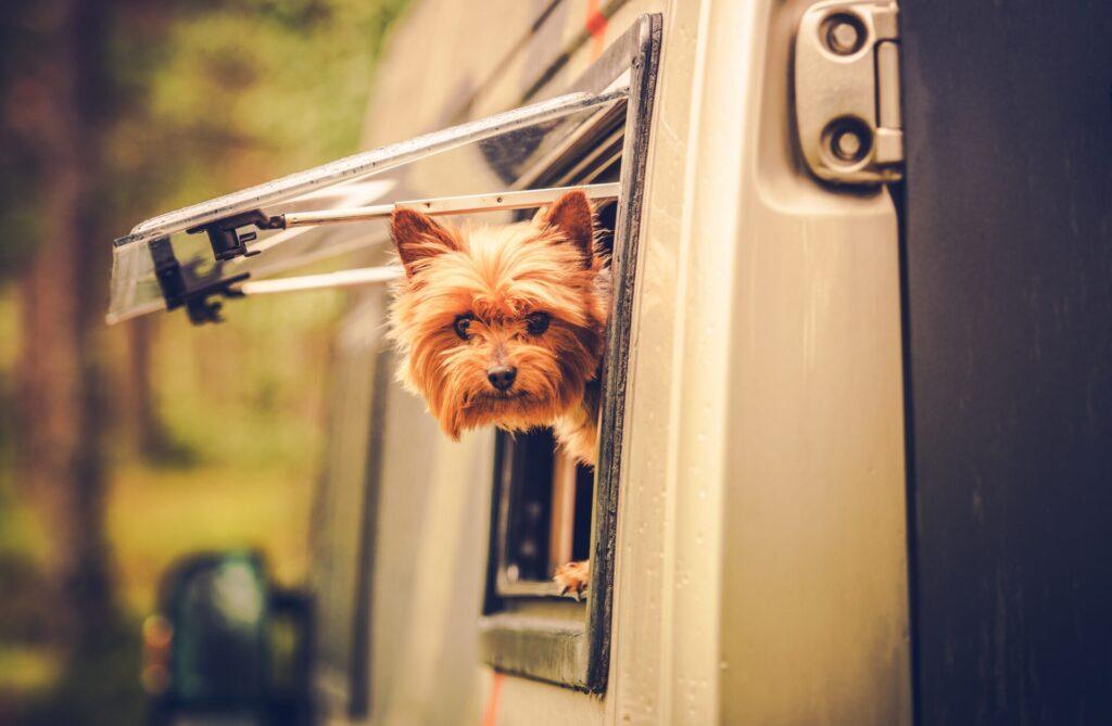 Prepare for pet travel